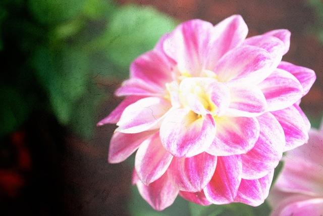 flower1_texture1