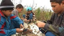 uzbekistan_cotton_child_slavery